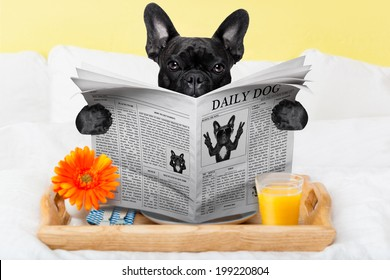 having breakfast in bed and reading the morning news