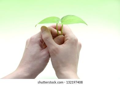 Having new leaves isolated on gradation green background, ecology image
