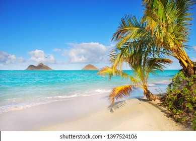 Hawaii Lanikai Palm Tree View