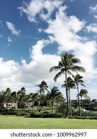 Hawaii Palms View