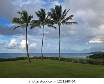 Hawaii: Row of Three Palm trees on scenic ocean vista