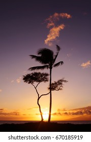 Hawaii Trees at Sunset with Ocean. Maui, Hawaii.