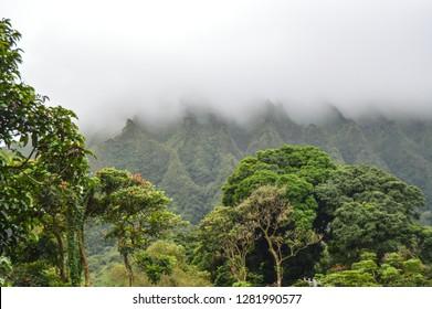 Hawaiian Botanical Garden, Oahu, Hawaii