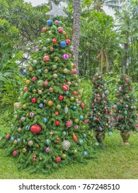 Hawaiian Christmas Trees with Tropical Plants and Trees in the Background.