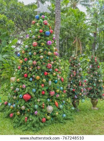 Hawaiian Christmas Trees Tropical Plants Trees Stock Photo Edit Now