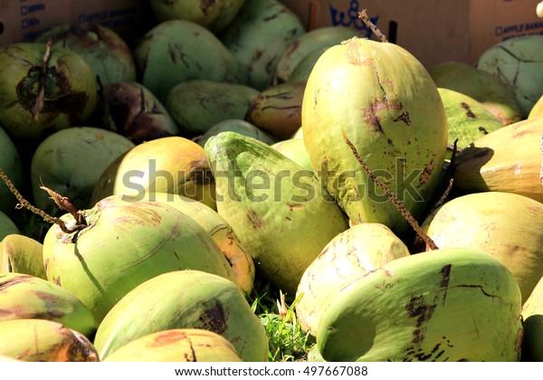 Hawaiian Coconut tropical fruits