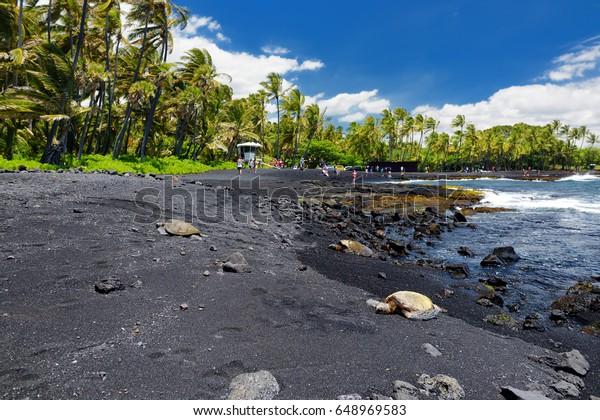 Hawaiian green turtles relaxing at Punaluu Black Sand Beach on the Big Island of Hawaii, USA