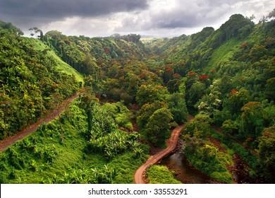 Hawaiian Jungle. Big island. USA