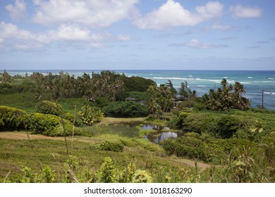 Hawaiian Landscape with Lush Vegetation and Ocean View
