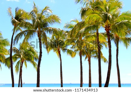 stock photo Hawaiian palm tree