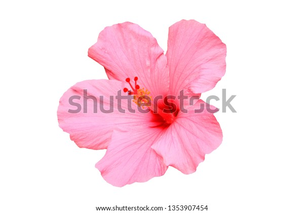 Hawaiian pink hibiscus