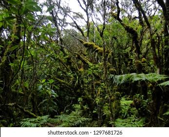 A Hawaiian rainforest on Molokai