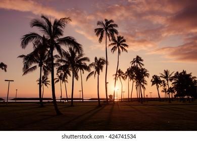 Hawaiian sunset with coconut tree silhouettes - Honolulu, Oahu