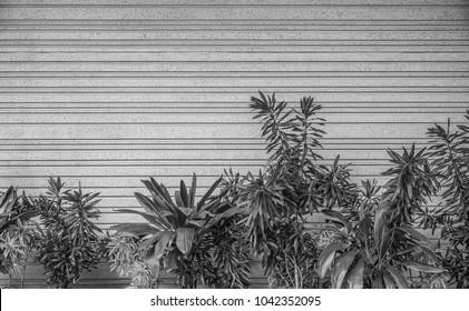 Hawaiian Tropical Plants with Molded Concrete Wall Backdrop.