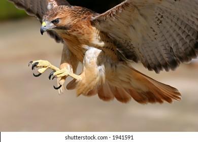 Hawk-Angriff