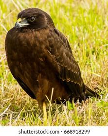 Hawk basking in the sun
