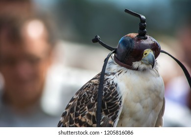 Hawk with a cover head