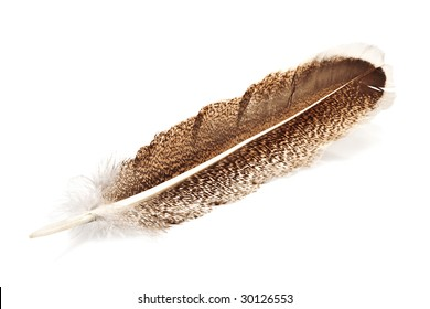 hawk feather isolated on white