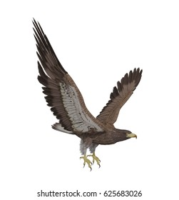 Hawk flying isolated on white background, 3D rendering