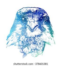 hawk head watercolor illustration