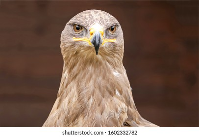 Hawk portrait. Hawk eyes view