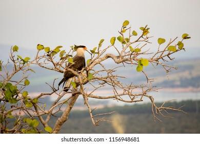 Hawk Serra da Canastra
