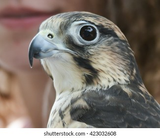 hawk with woman