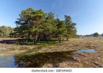Hawkhill Inclosure tree line in the New Forest National Park