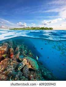 Hawksbill Sea Turtle exploring coral reef under the water surface. Tropical island above. Underwater sealife