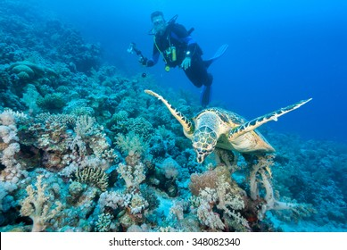 A hawksbill sea turtle gliding acrobatically in front of a underwater photographer