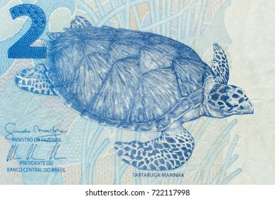 Hawksbill sea turtle on the fragment of two brazilian real banknote close up