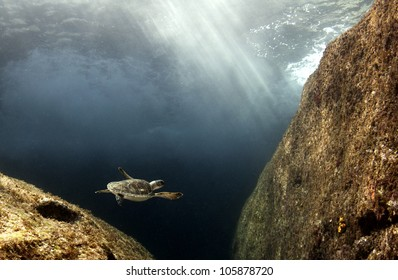 A hawksbill sea turtle swims over large rocks in the Bahamas as the sun beams down