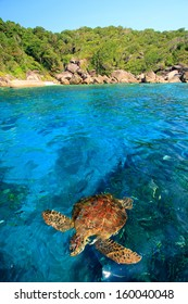 The hawksbill turtle on clear sea, Similan Islands, Phang-nga, Thailand.