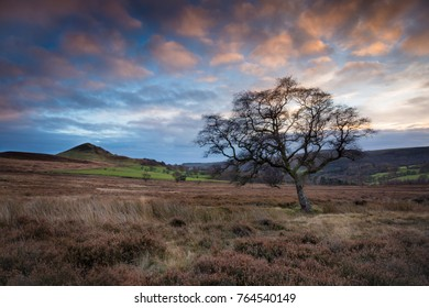 Hawnby Hill and Hawnby Moor in the North York Moors national park with a tree in the foreground at sunset.