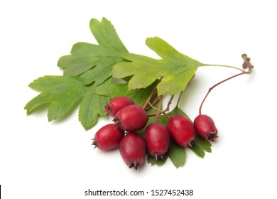 Hawthorn berries with leaves on white background
