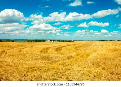 hay after harvest on the field