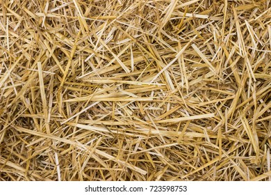 Hay background, dry yellow grass
