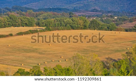 Hay bails strew in a field