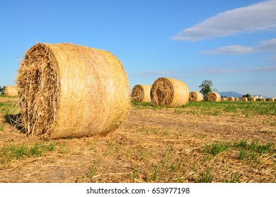 Hay bale in the countryside.