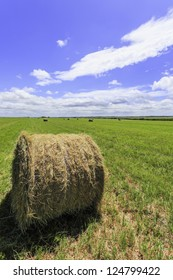 Hay bale freshly cut and baled with blue sky and green field, to be used forlivestock feed in winter