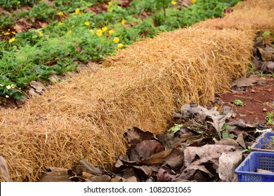 Hay bale is placed in same line in garden.