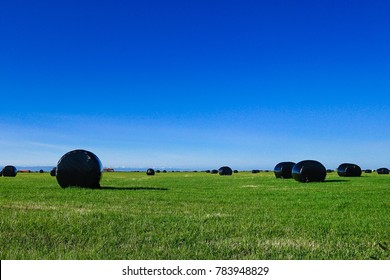 Hay bales in black plastic film stacked on a huge field near Reykholt in Iceland. Sunny summer day.