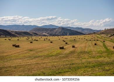 Hay bales drying under Oregon sun