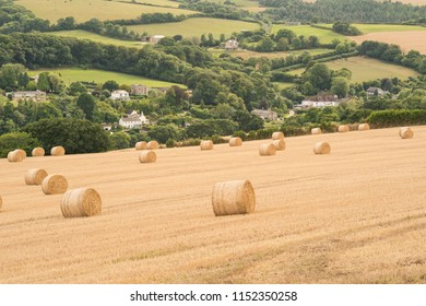 Hay bales at the end summer.