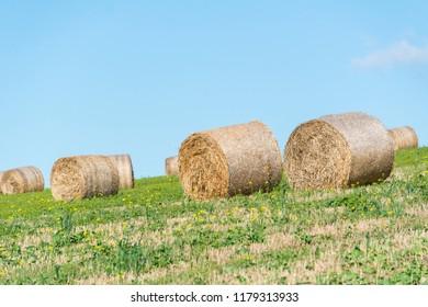 Hay bales in a field