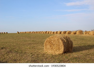 hay bales in a field in autumn against a blue sky
