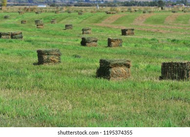 Hay bales in field awating the picker/stacker.
