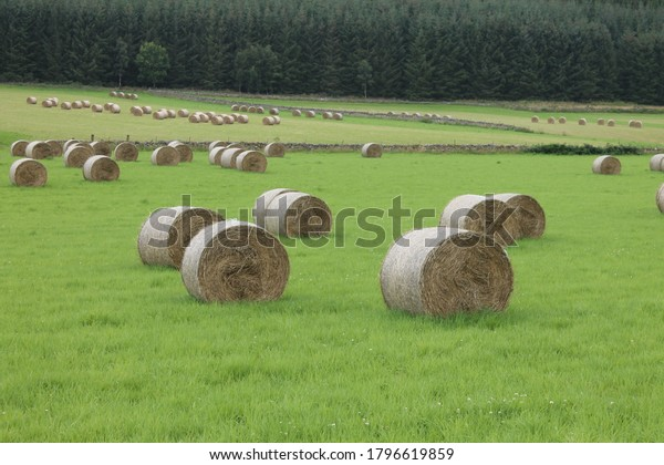 Hay bales in a field  with copy space