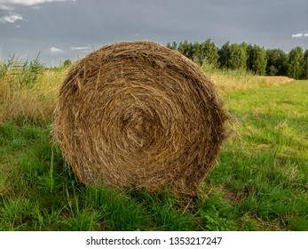 hay bales in the field, preparing food for animals for the winter