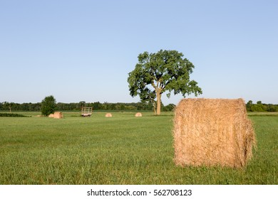 Hay Bales in Field with Tree - Golden hay bales in a green field.  Focus on foreground bale with large tree and a hay wagon in the background.  Copy space in sky if needed.
